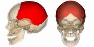 Перелом теменной кости у ребенка